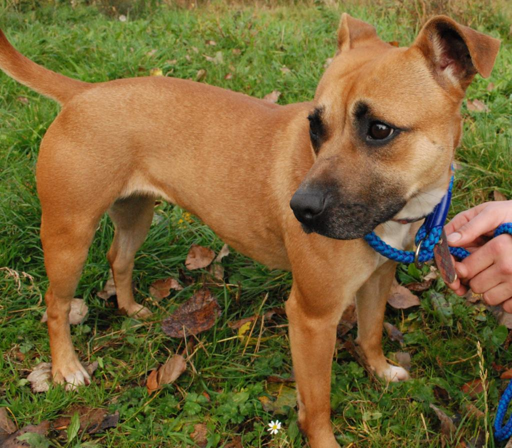 Dog Rescue In Staffordshire And Cheshire