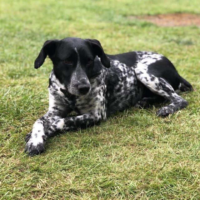 Ruby and Ria - 1-3 year old female Cross-Breeds available